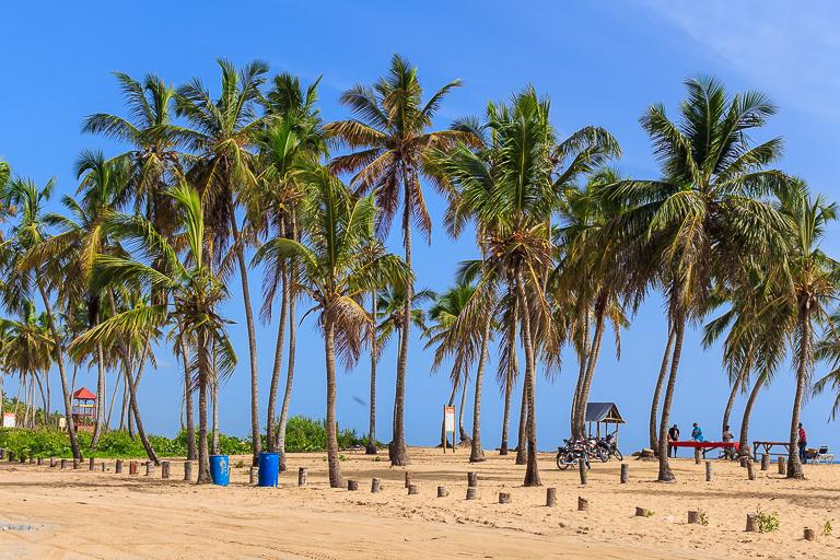 Entdeckungstour rund um Punta Cana | Macao Beach - Palmen am Strand