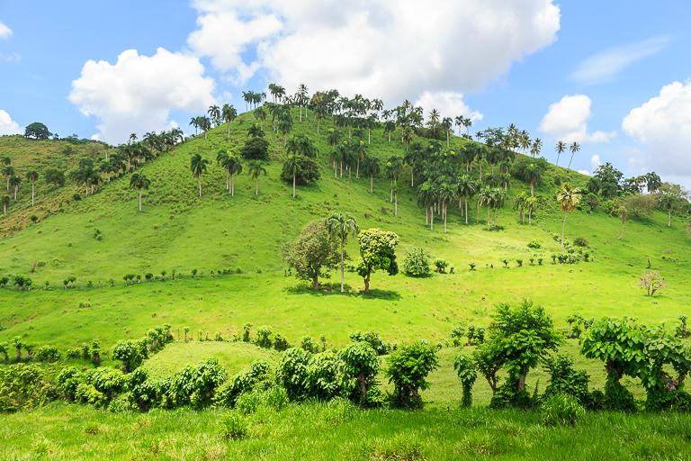Entdeckungstour rund um Punta Cana | Natur - Grüne Landschaften