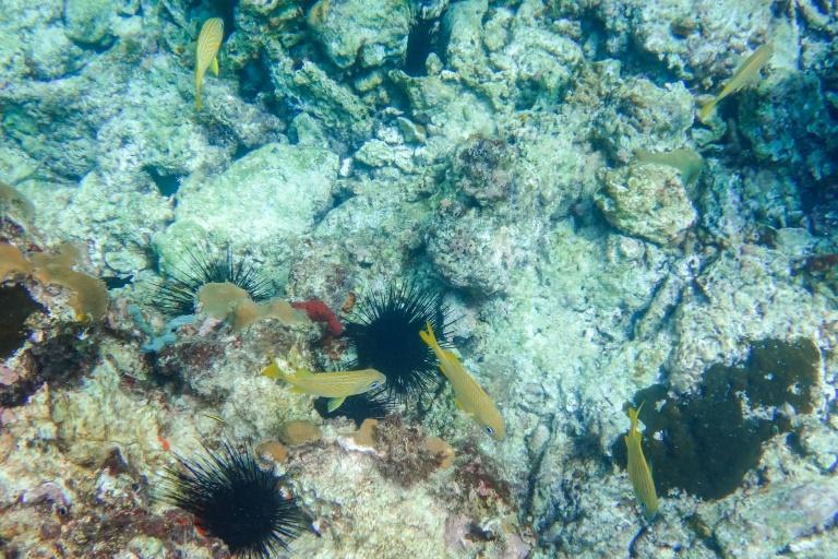 Saona Ausflug | Bunte Fische in Bayahibe