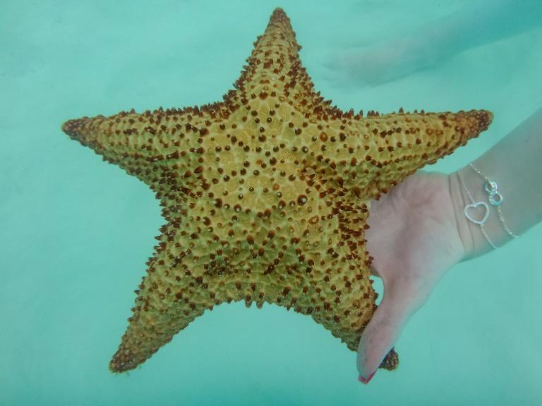 Saona Ausflug | Seesterne in Palmilla