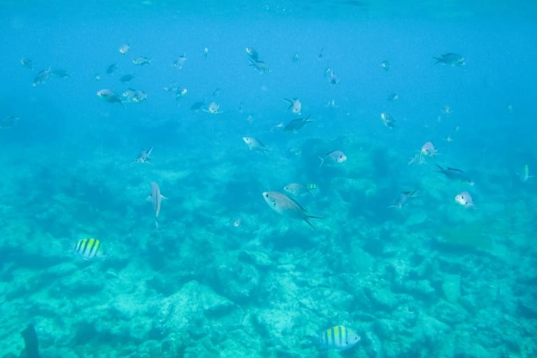 Saona Ausflug | Unterwasserwelt von Bayahibe