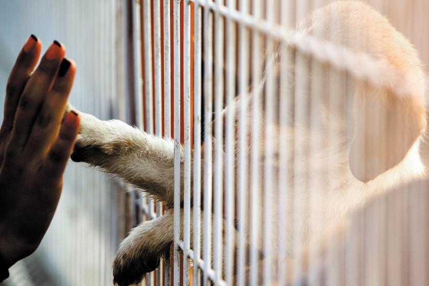 Urlaubsbetreuung für dein Haustier