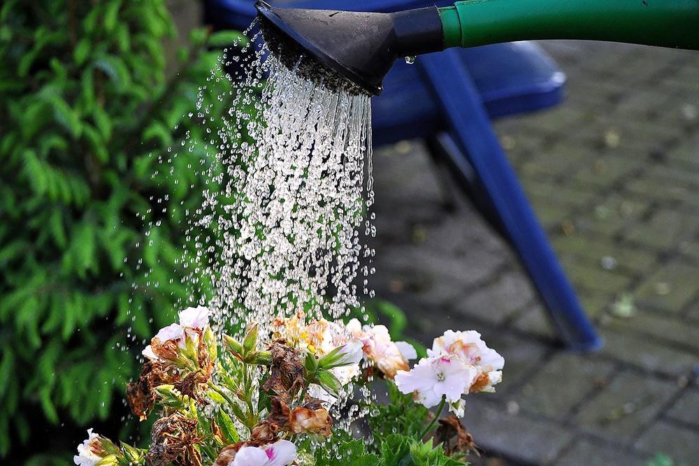 Gartenpflanzen gießen